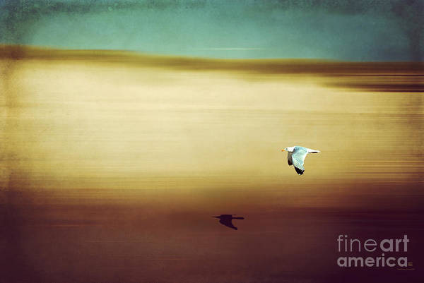 Photograph - Flight Over The Beach by Hannes Cmarits
