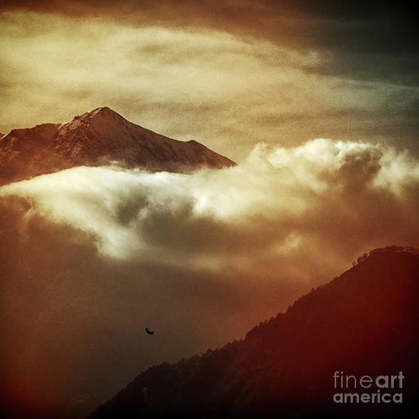 Photograph - Flight by Silvia Ganora