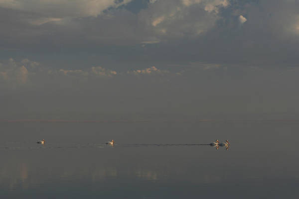 Photograph - Floating Along by Laurie Search