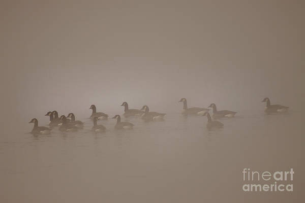 Wall Art - Photograph - Floating In The Fog by Angel Ciesniarska
