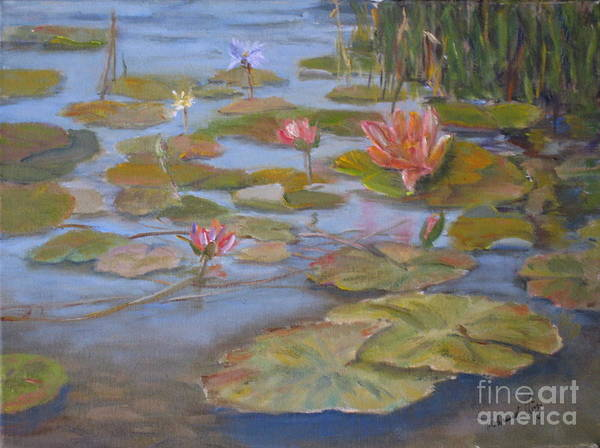 Lilly Pad Painting - Floating Lillies by Mohamed Hirji