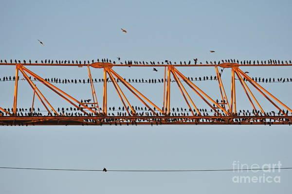Wall Art - Photograph - Flock Of Birds Perching On Construction Crane by Sami Sarkis