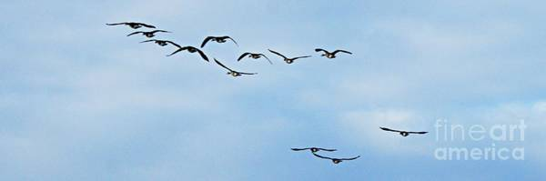 Photograph - Flock Of Geese In Flight by Larry Ricker