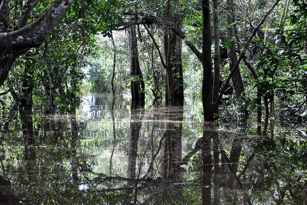 Colombia Photograph - Flooded Amazon Rainforest by Oliver J Davis Photography