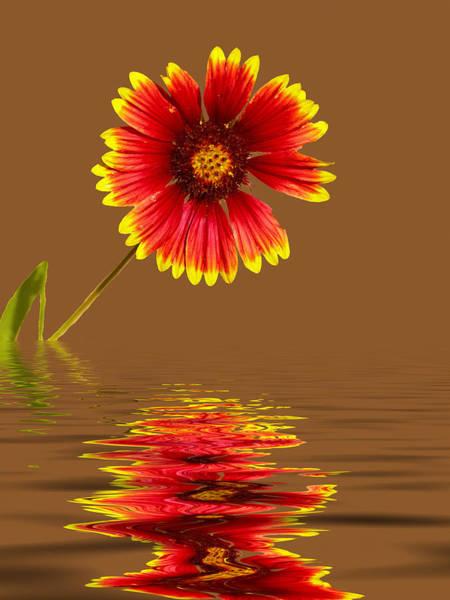 Photograph - Flooded Beach Flower by Bill Barber