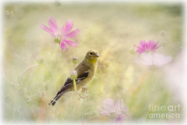 Little Things Photograph - Floral Finch by Cris Hayes