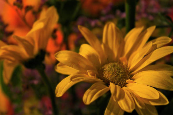 Photograph - Floral Vibrance by Scott Hovind