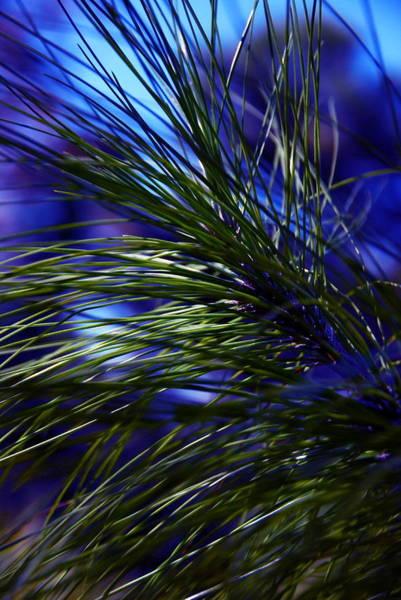 Photograph - Florida Grass by Ellie Perla