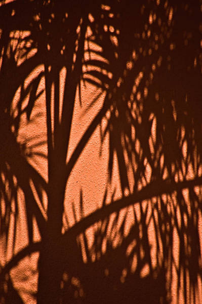 Photograph - Florida Palm Shadow by Carolyn Marshall