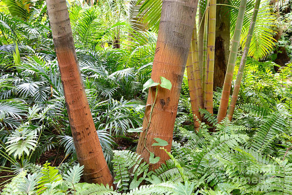 Photograph - Florida Palms And Ferns by Carol Groenen