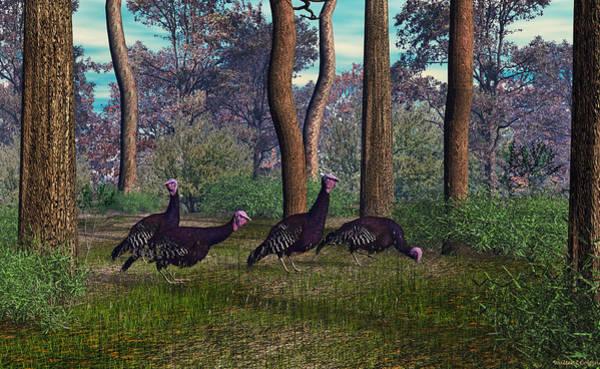 Sportsman Digital Art - Florida Race Turkeys by Walter Colvin
