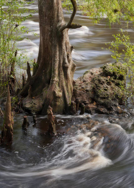 Photograph - Florida Rapids by Steven Sparks