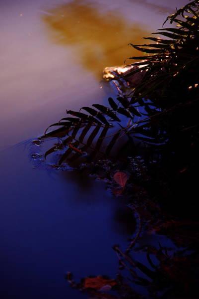 Photograph - Lake Sunset by Ellie Perla