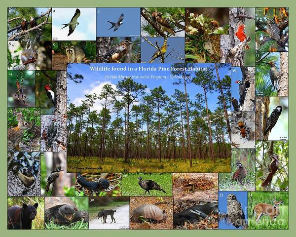 Photograph - Florida Wildlife Photo Collage by Barbara Bowen