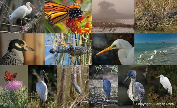 Photograph - Florida Wildlife Photography Fine Art Collage by Juergen Roth