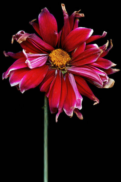Wall Art - Photograph - Flower - Bad Hair Day  by Mike Savad