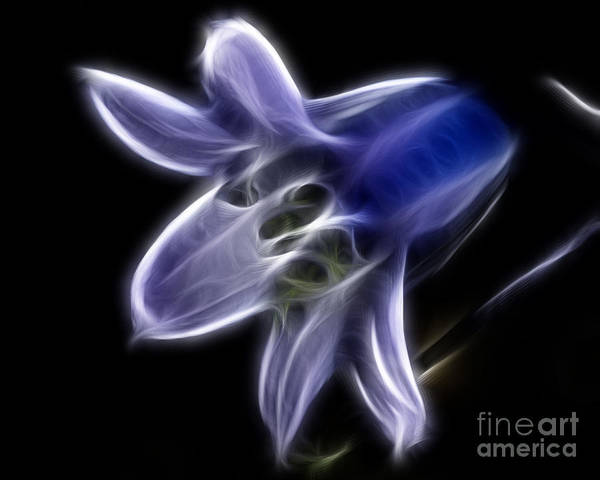 Wall Art - Photograph - Flower - Ghostly Blue - Abstract by Paul Ward