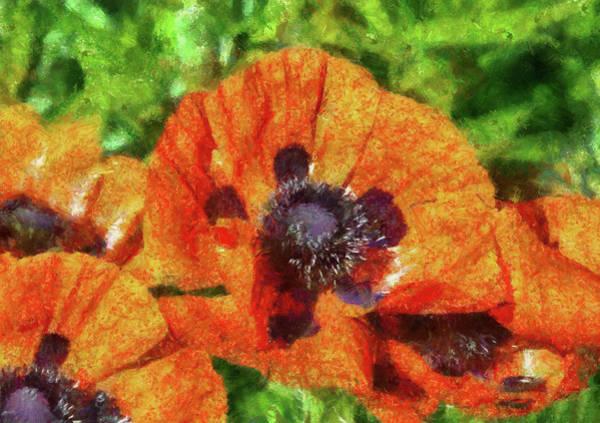 Photograph - Flower - Poppy - Orange Poppies  by Mike Savad
