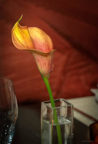 Photograph - Flower And Vase by Frank Mari