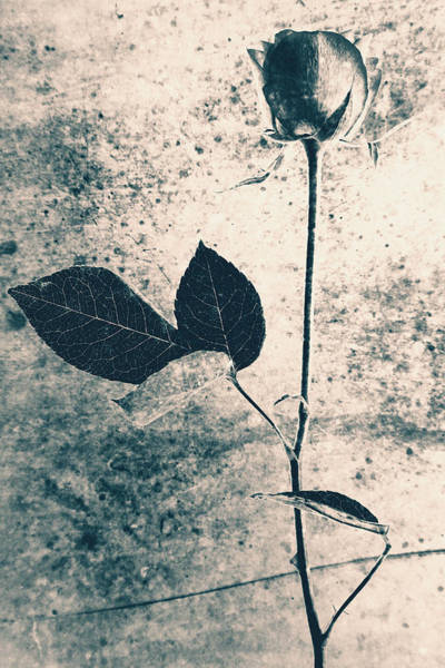 Wall Art - Photograph - Flower Art by Falko Follert
