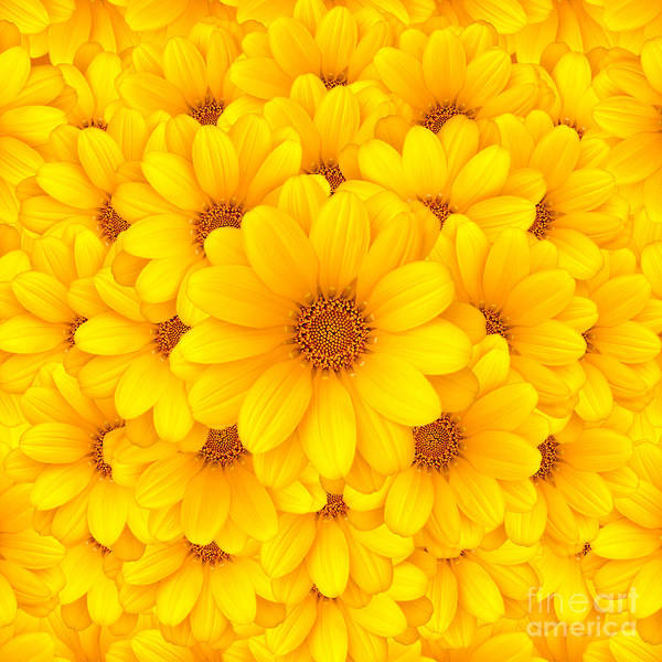 Wall Art - Photograph - Flower Background by Carlos Caetano