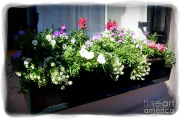 Photograph - Flower Box 5 by Donna Bentley