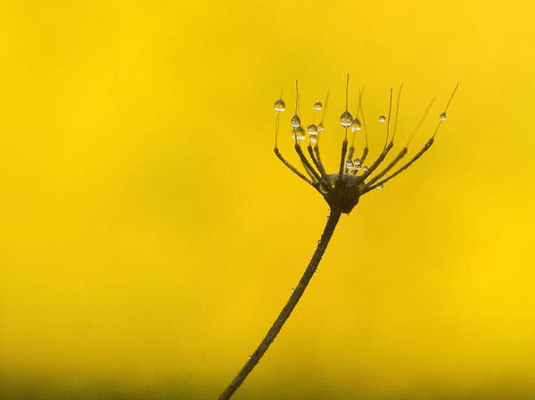 Photograph - Flower Drops by Odon Czintos