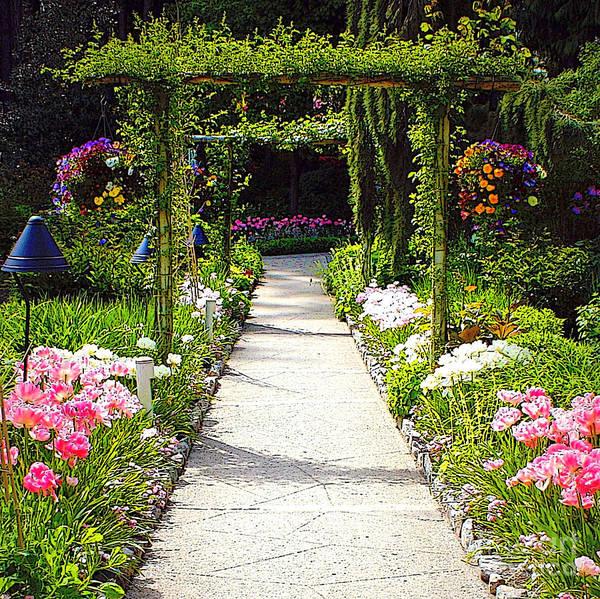 Photograph - Flower Garden - Digital Painting by Carol Groenen