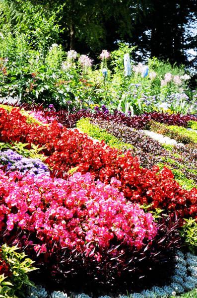 Photograph - Flower Garden Versailles by Donna L Munro