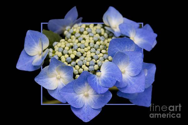 Flower In Frame -11 Art Print