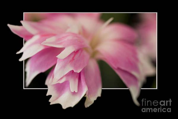 Flower In Frame -2 Art Print