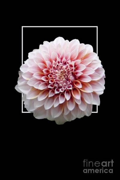 Flower In Frame -4 Art Print