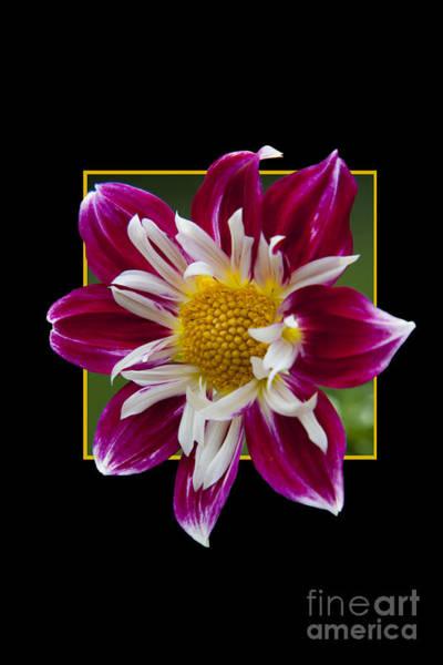 Flower In Frame -5 Art Print