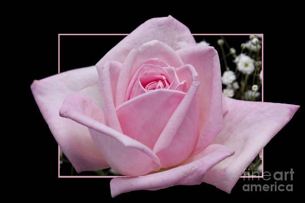 Flower In Frame -9 Art Print