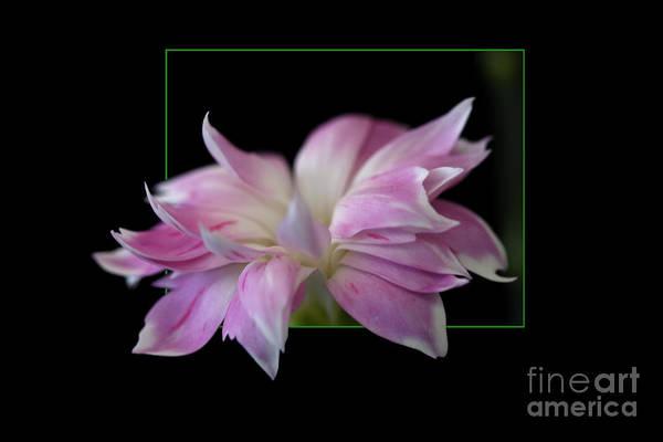 Flower In Frame Art Print