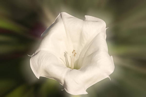 Photograph - Flower In The Autumn by Cliff Norton