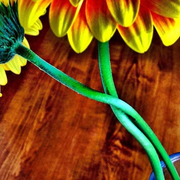 Wall Art - Photograph - Flower Love by Christopher Campbell