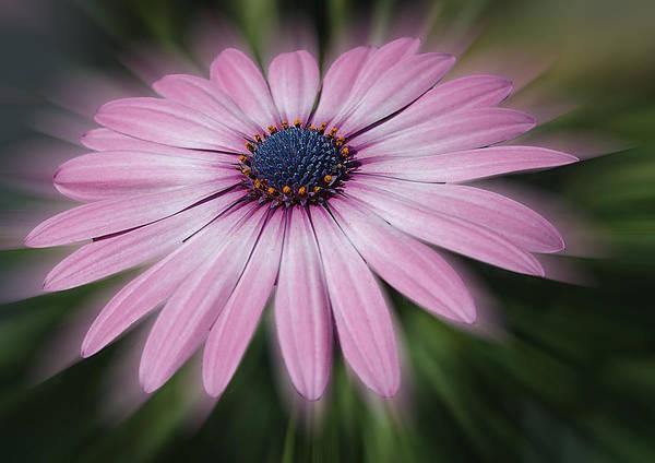 Flower Zoom Art Print