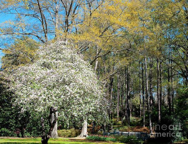 Flowering Trees Photograph - Flowering Garden by Shijun Munns