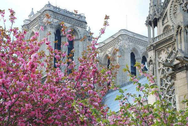 Photograph - Flowering Notre Dame by Jennifer Ancker
