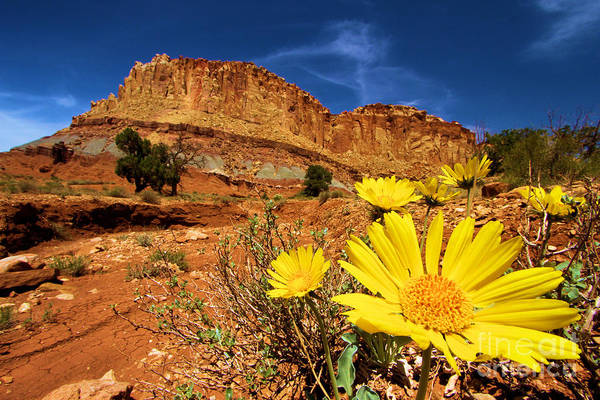 Wall Art - Photograph - Flowers And Buttes by Adam Jewell