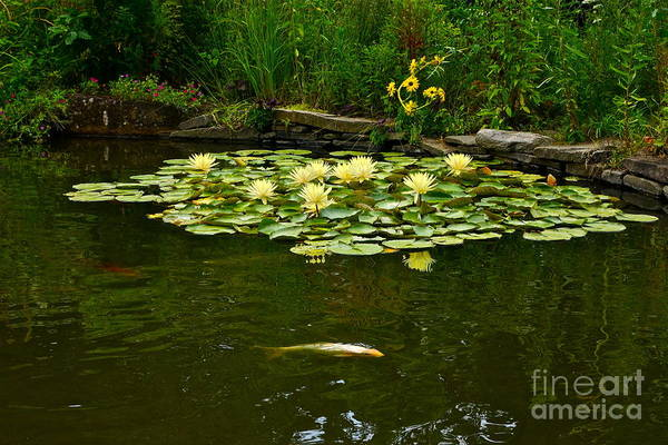 Photograph - Flowers And Koi by Byron Varvarigos