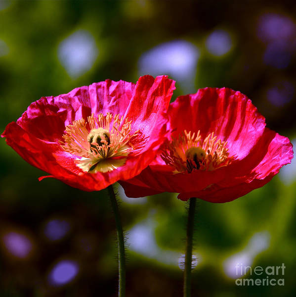 Photograph - Flowers Are For Fun by Byron Varvarigos