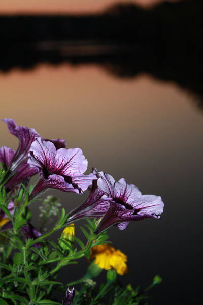 Photograph - Flowers At Dusk by Pat Moore