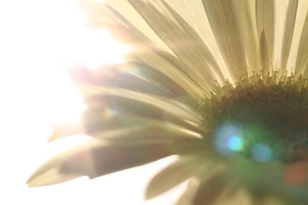 Blume Photograph - Flowers by Falko Follert