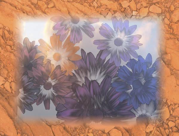 Photograph - Flowers For Algernon by Trish Tritz