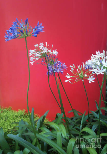 Photograph - Flowers In The City by Eena Bo