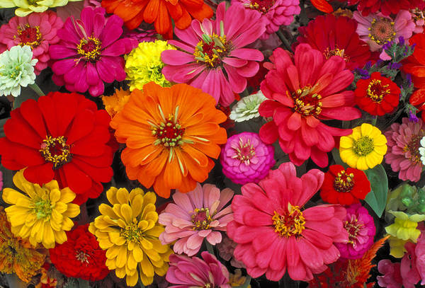 Photograph - Flowers by Larry Landolfi
