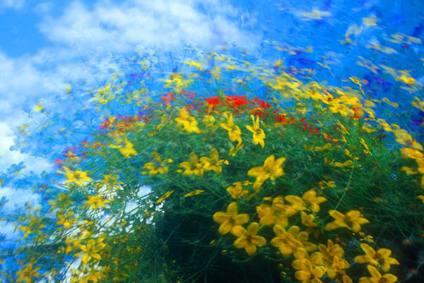 Wall Art - Photograph - Flowery Sky by David Smith