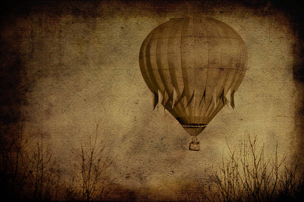 Photograph - Flying High by Trish Tritz
